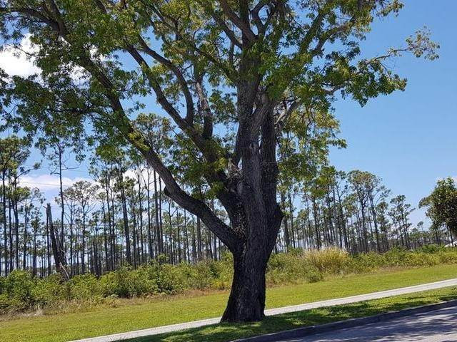 4. Land for Sale at Caravel Beach, Freeport and Grand Bahama, Bahamas