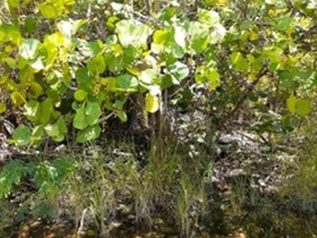 11. Land for Sale at Governors Harbour, Eleuthera, Bahamas