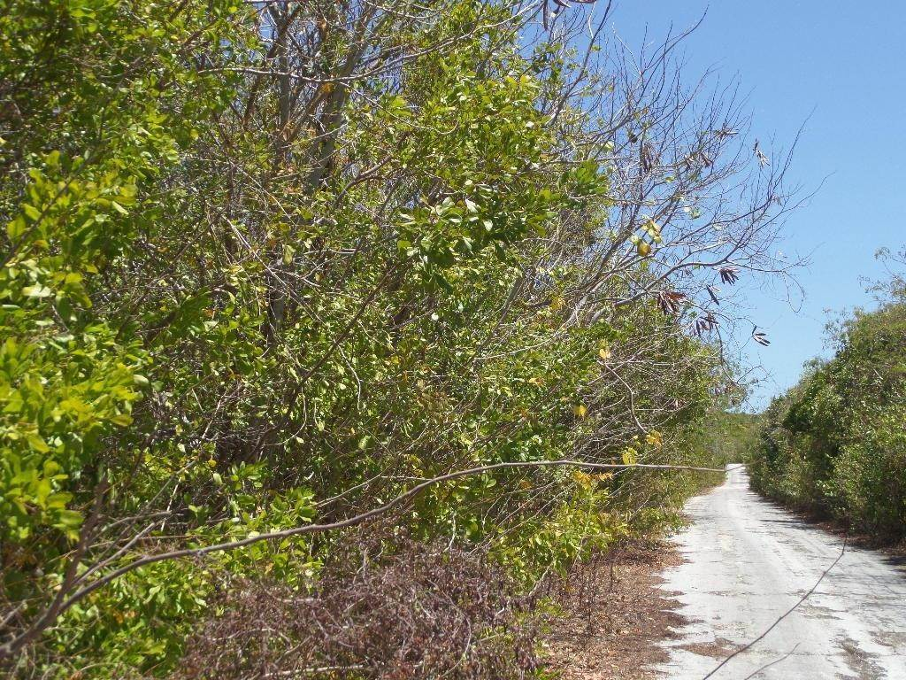 Land for Sale at Stella Maris, Long Island, Bahamas