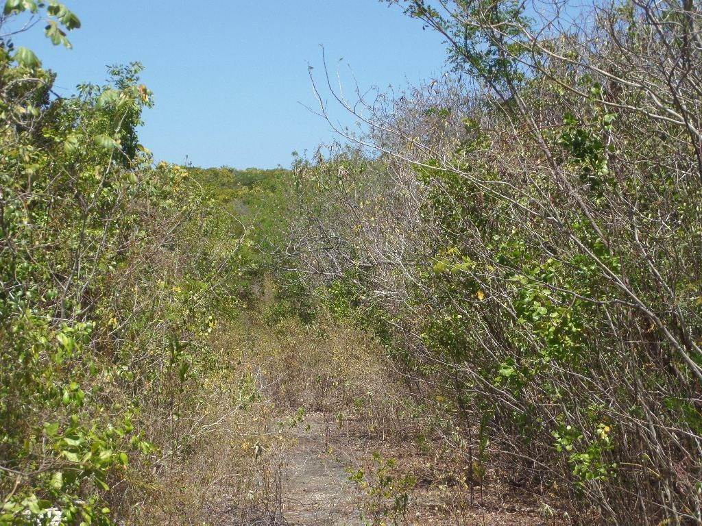 6. Land for Sale at Stella Maris, Long Island, Bahamas
