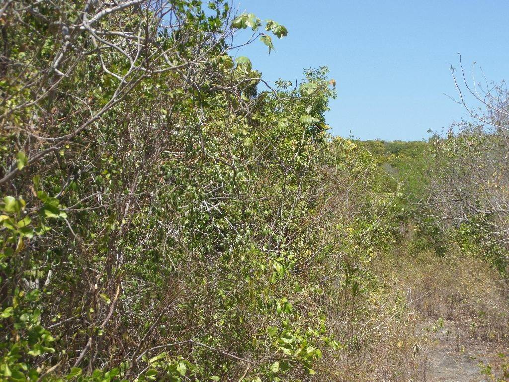 7. Land for Sale at Stella Maris, Long Island, Bahamas