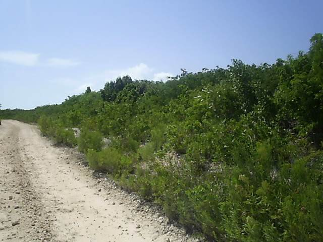 Land for Sale at Ideal Investment Property Long Island, Bahamas