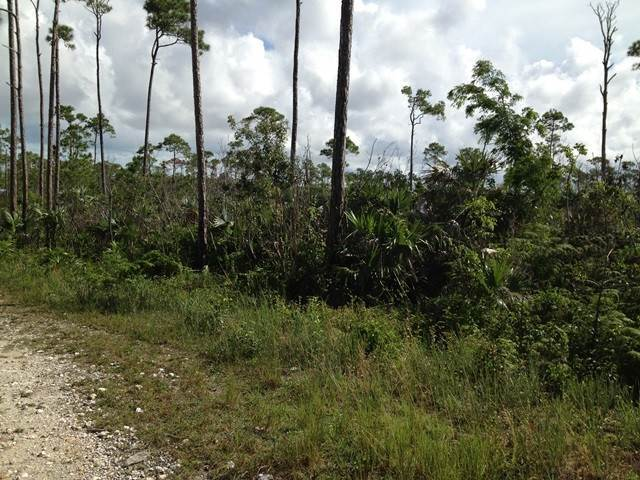 Land for Sale at Homesite in Lucaya Arden Forest, Freeport And Grand Bahama, Bahamas