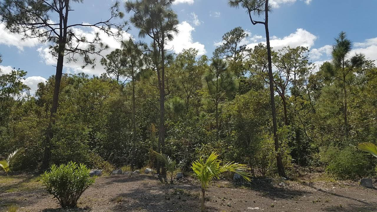Land for Sale at #8 White Crown Paradise Resort, Love Hill, Andros Fresh Creek, Andros, Bahamas