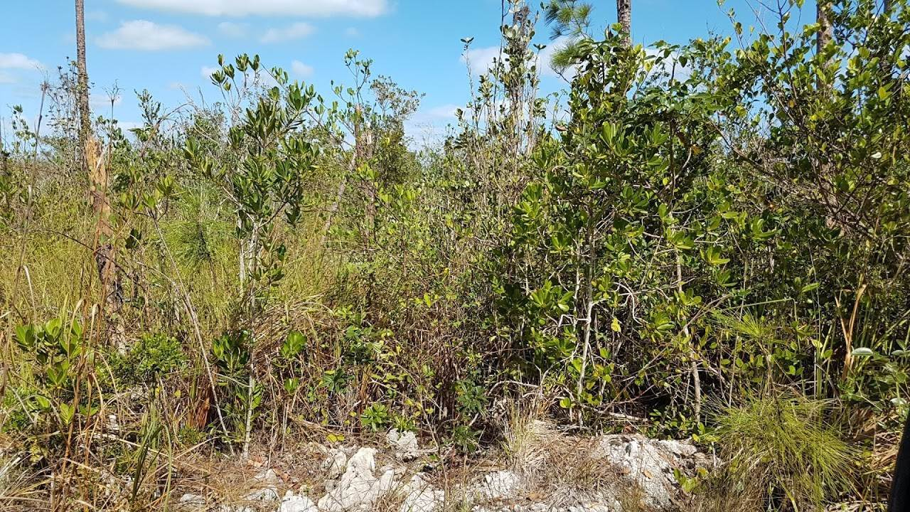 Land for Sale at #21 White Crown Paradise Resort, Fresh Creek, Andros Fresh Creek, Andros, Bahamas