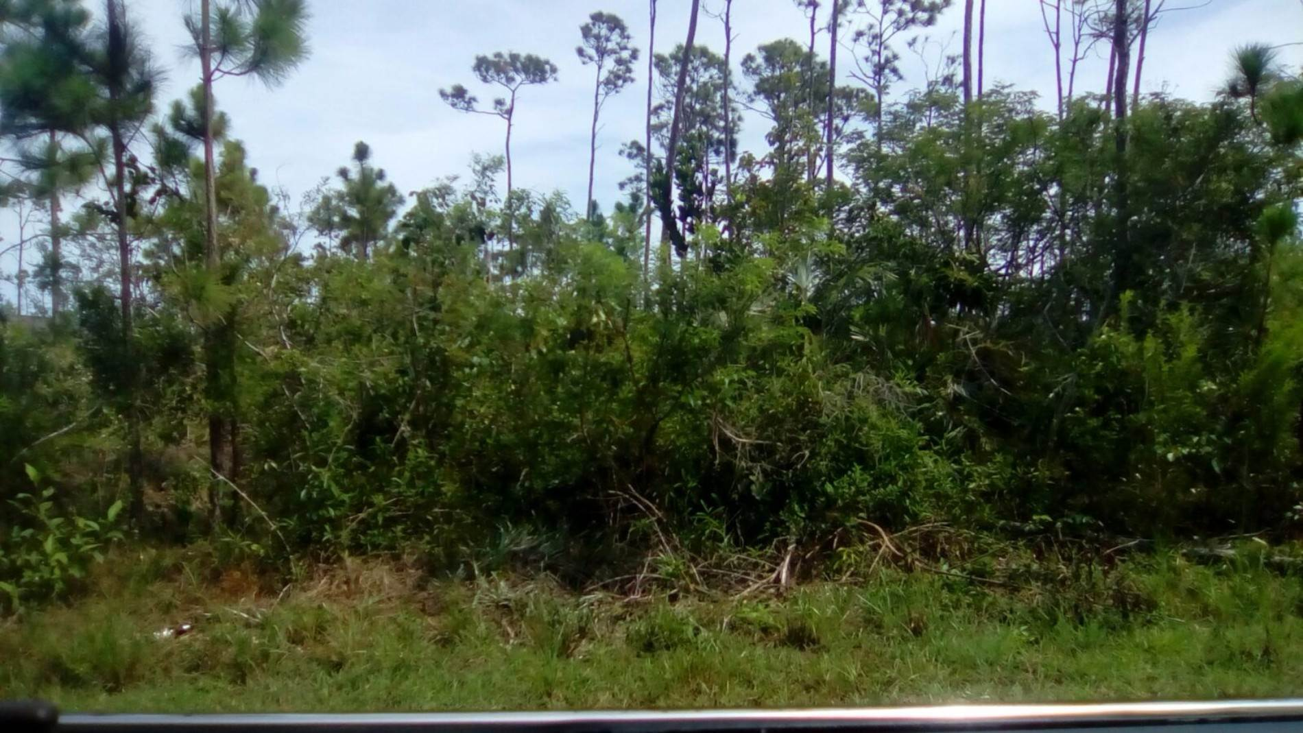 Land for Sale at Single Family Lot in Sherwood Forest (MLS #30796) Sherwood Forest, Freeport And Grand Bahama, Bahamas