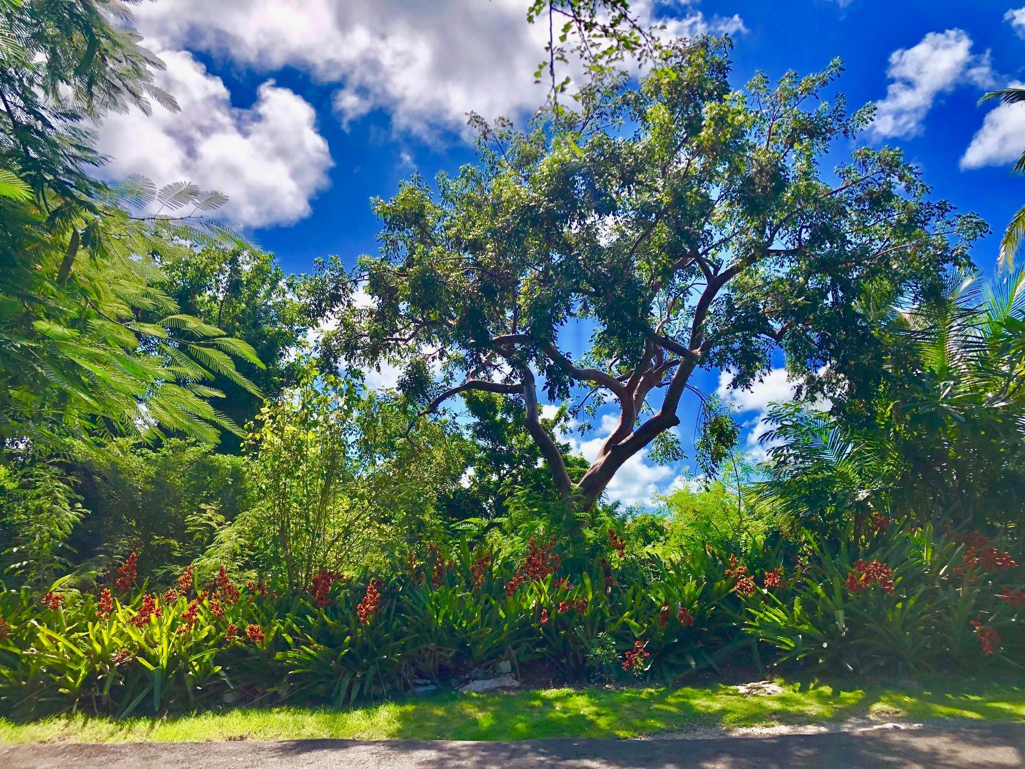 Land for Sale at Landscaped lot in gated quiet cul-de sac in Camperdown off Eastern Road - MLS 39125 Camperdown, Nassau And Paradise Island, Bahamas