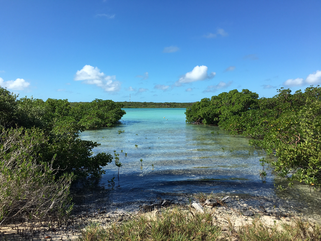 9. Land for Sale at Sea-to-Sea Beachfront Lot on Windermere Island - MLS 44293 Windermere Island, Eleuthera, Bahamas