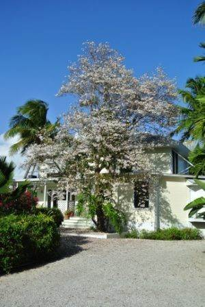 46. Single Family Homes for Sale at Tambourina Island Villa and Cottage, Eastern Road (MLS 24295) Eastern Road, Nassau And Paradise Island, Bahamas
