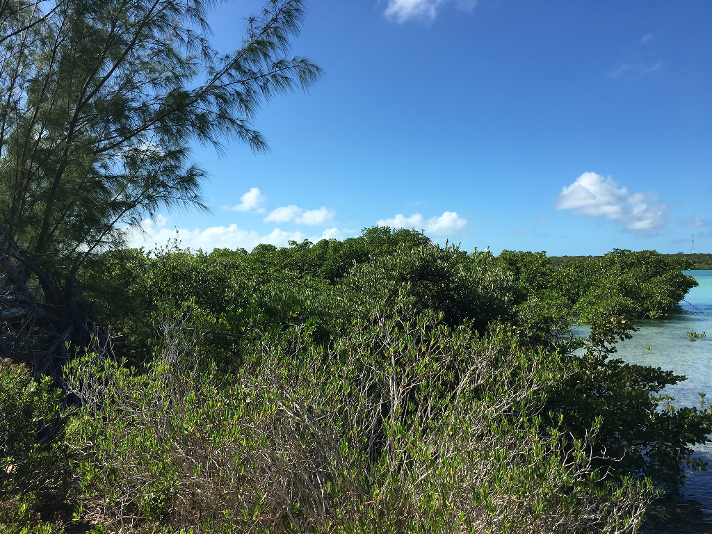 15. Land for Sale at Sea-to-Sea Beachfront Lot on Windermere Island - MLS 44293 Windermere Island, Eleuthera, Bahamas