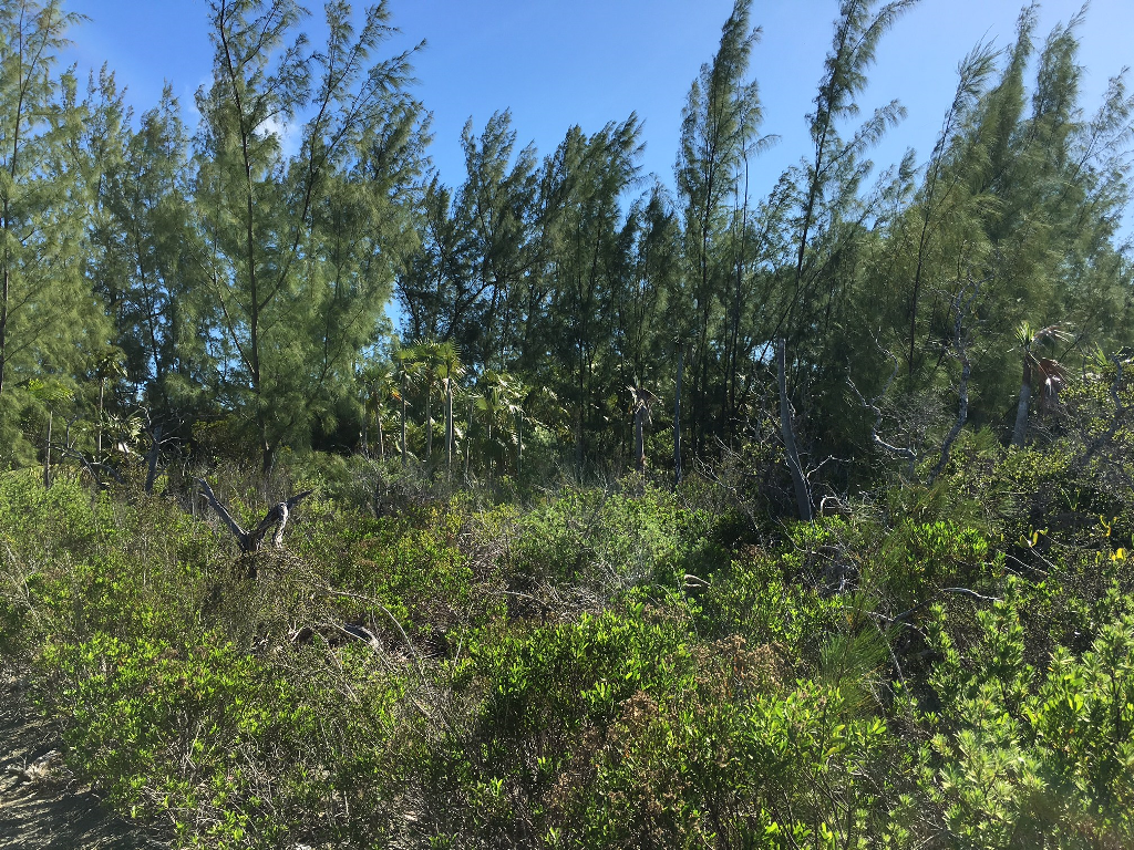 16. Land for Sale at Sea-to-Sea Beachfront Lot on Windermere Island - MLS 44293 Windermere Island, Eleuthera, Bahamas