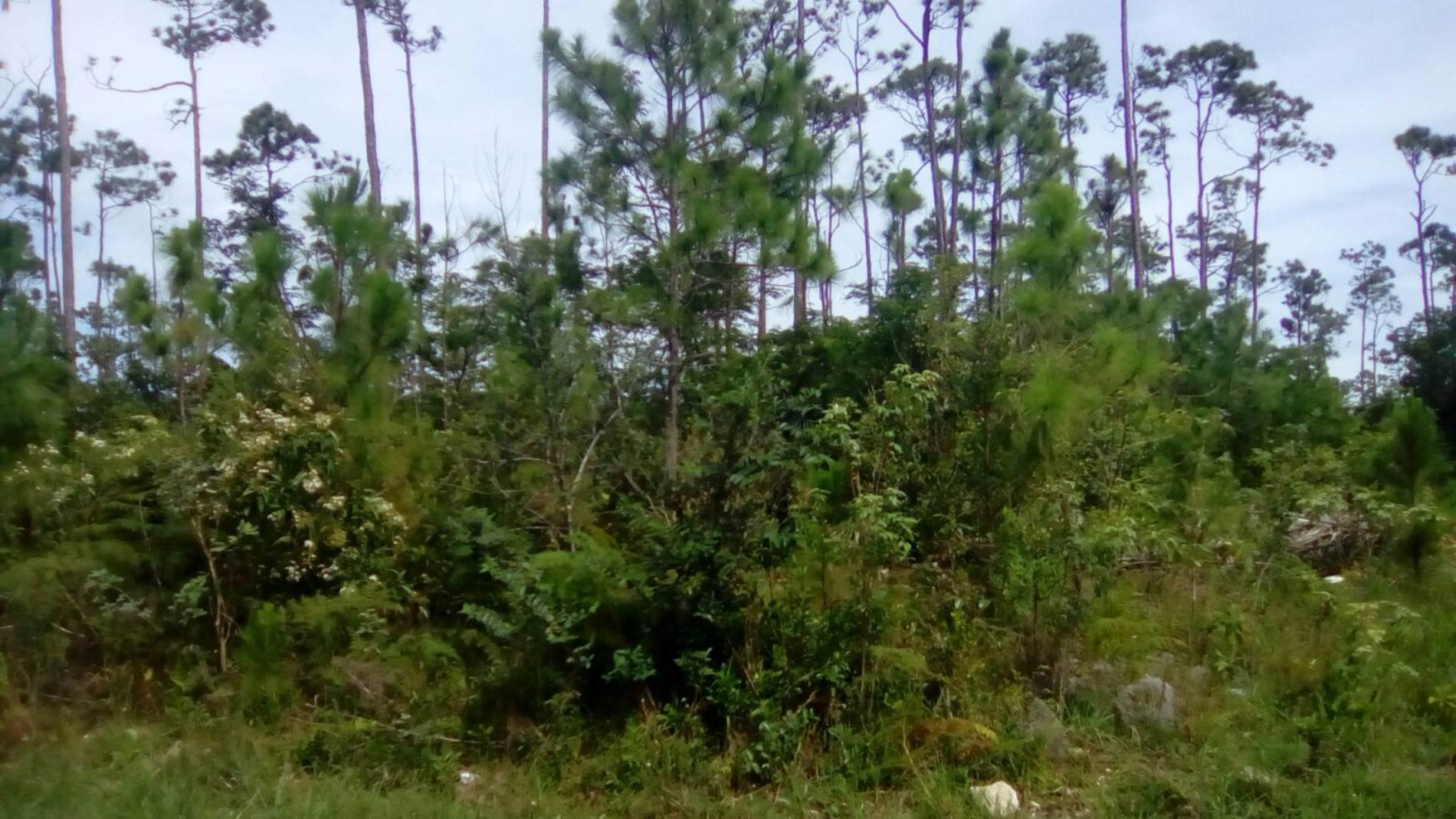 3. Land for Sale at Single Family Lot in Sherwood Forest (MLS #30796) Sherwood Forest, Freeport And Grand Bahama, Bahamas