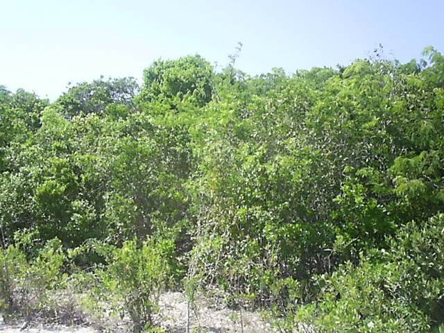 3. Land for Sale at Ideal Investment Property Long Island, Bahamas