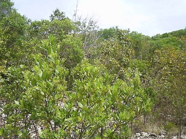 3. Land for Sale at Own Your Piece Of Long Island Long Island, Bahamas