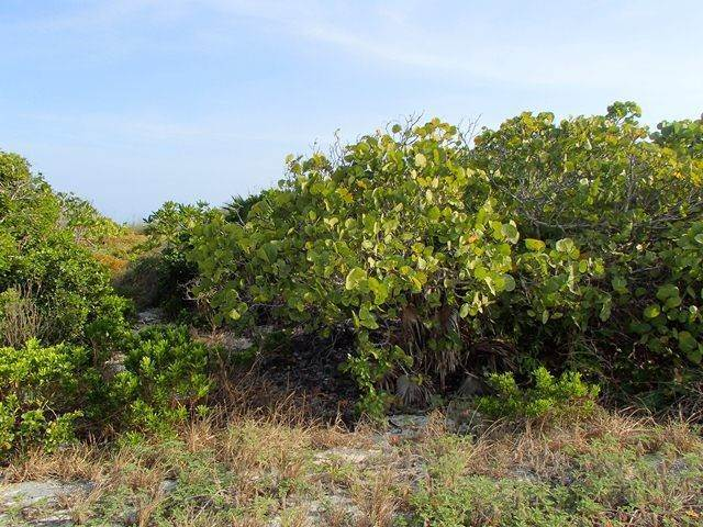 4. Land for Sale at Lovely Lot in Columbus Landings with utilities Columbus Landings, San Salvador, Bahamas