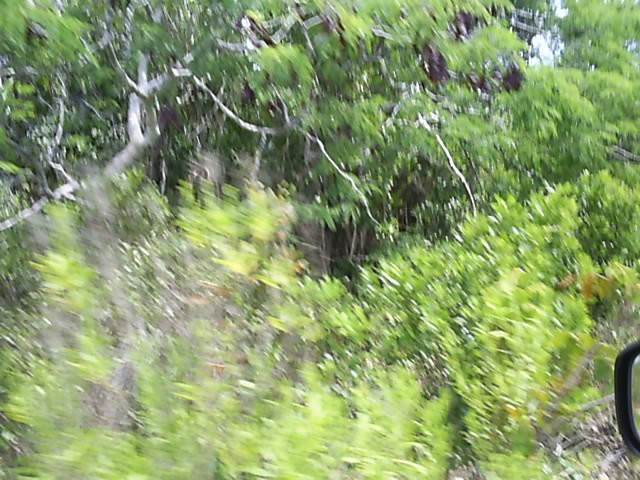 5. Land for Sale at Own Your Piece Of Long Island Long Island, Bahamas