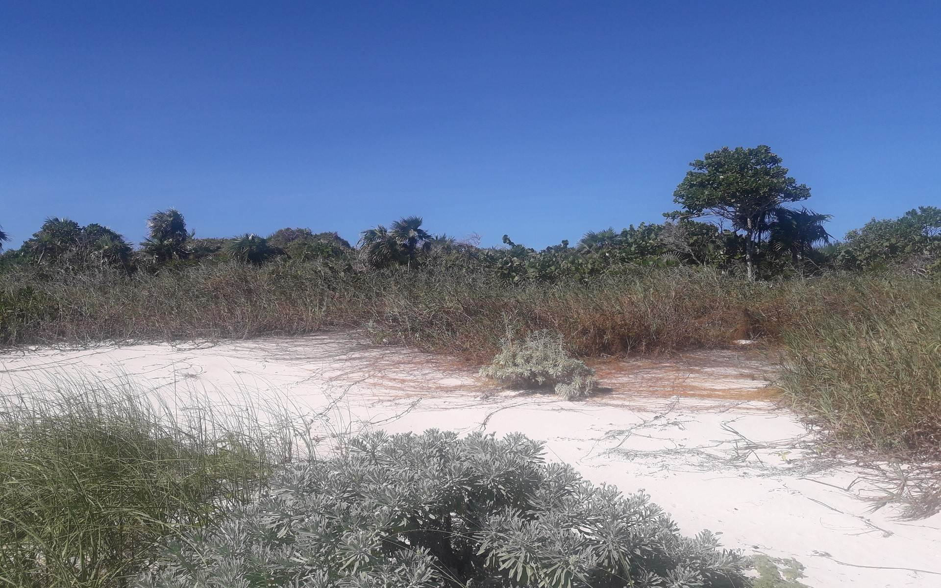 6. Land for Sale at Affordable Ocean Front Multi-Family lot on San Salvador - MLS 43101 Columbus Landings, San Salvador, Bahamas